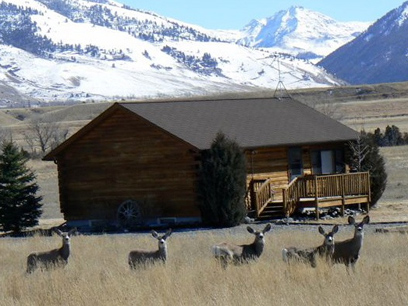 Mule deer in Paradise Valley, Montana